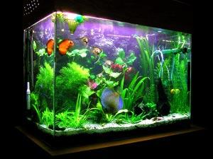 Tamilnadu color fish farming: மீன் வளர்ப்பு in ...
