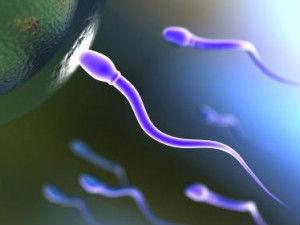 ஆண்களே கொழுப்புச் சத்துள்ள உணவுகளை தவிருங்கள் ! 16-sperm-cells1