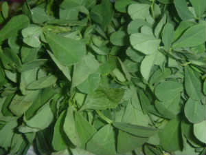 Health Benefits Fenugreek Leaves