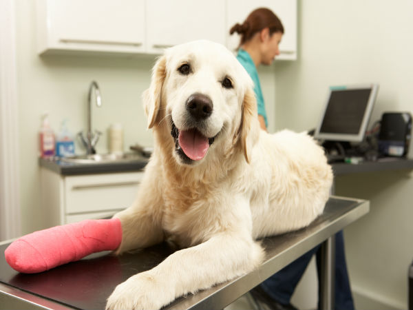 Simple Pet Care Tips For An Injured Dog
