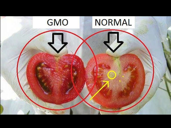 Here's How To Identify GMO Tomatoes