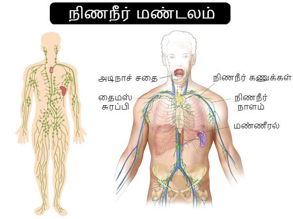 How To Cleanse Your Lymphatic System