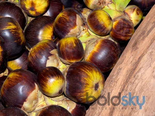 Health benefits of eating Palm tuber