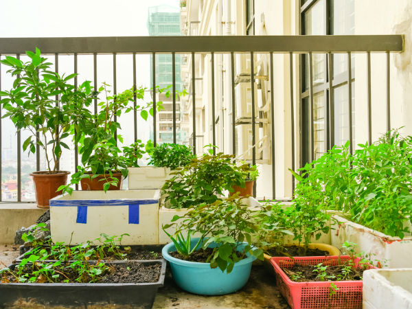 Basic needs to grow greenleafy garden in terrace