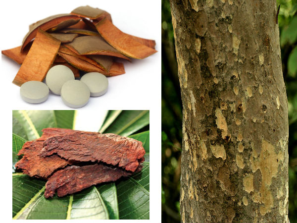 Medicinal properties and benefits of Terminalia Arjuna tree