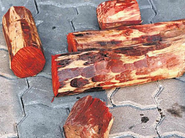 Reasons for Why there is always demand for Red Sandalwood Tree