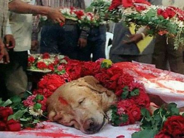 Reasons Why After Retirement Indian Army Dogs Gets Punishment Of Deaths!