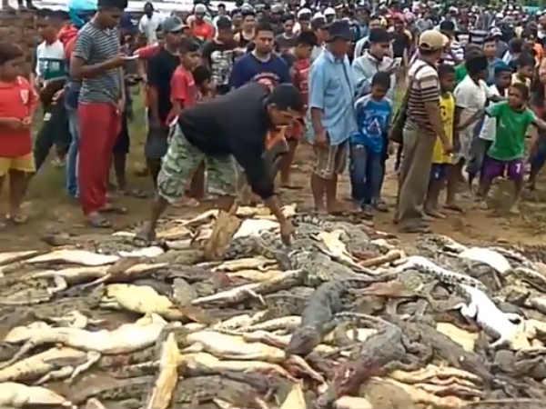ஈவிரக்கமின்றி 300 உயிர்களை கொன்று குவித்த இந்தோனேசிய மக்கள் - (வீடியோ)