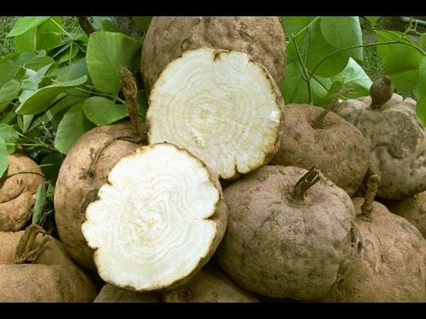 பருத்த உடம்பையும் ஊசிபோல் மெலியச் செய்யும் கருணைக்கிழங்கு... எப்படி  சாப்பிடணும்?   amazing health benefits of yam veggie for weight lose -  Tamil BoldSky