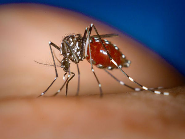 Symptoms and home remedies for Chikungunya