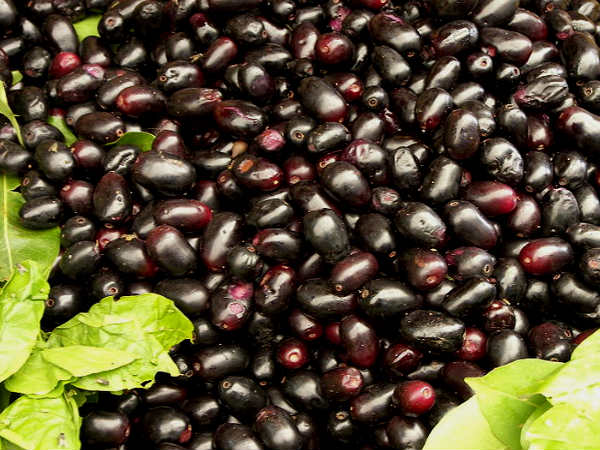 How Jamun Seeds Helpuful For Diabetes