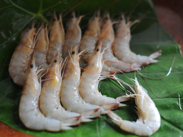 Advantages & Disadvantages Of Prawn