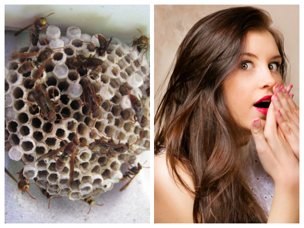 wasp nests for vaginal rejuvenation