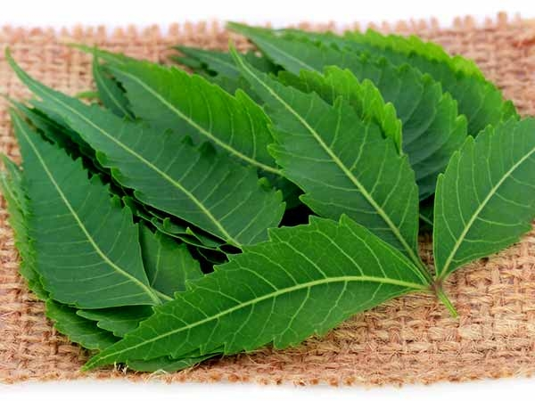 Neem For Diabetes: How Does The Wonder Herb Help Manage Blood Sugar Levels