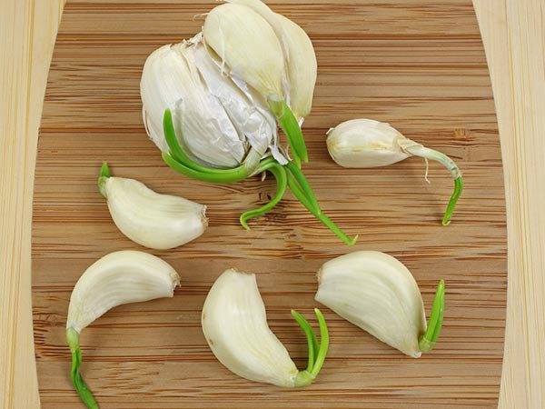 eating sprouted garlic daily for heathy antioxidants