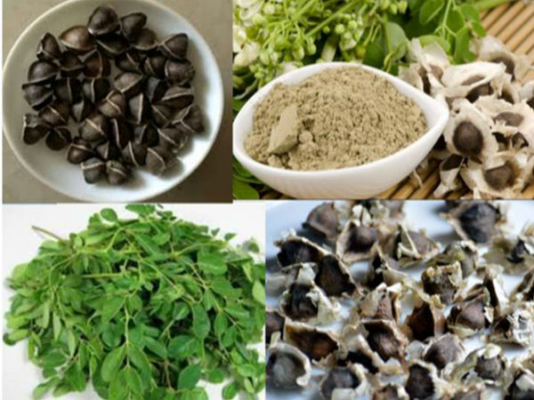 Moringa Seeds For Diabetics