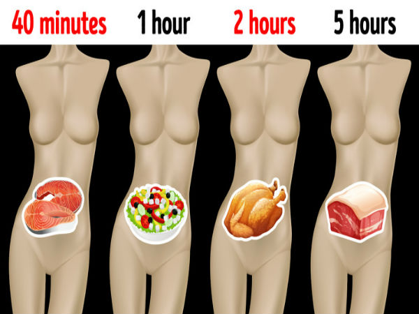 How Long Different Foods Take To Digest