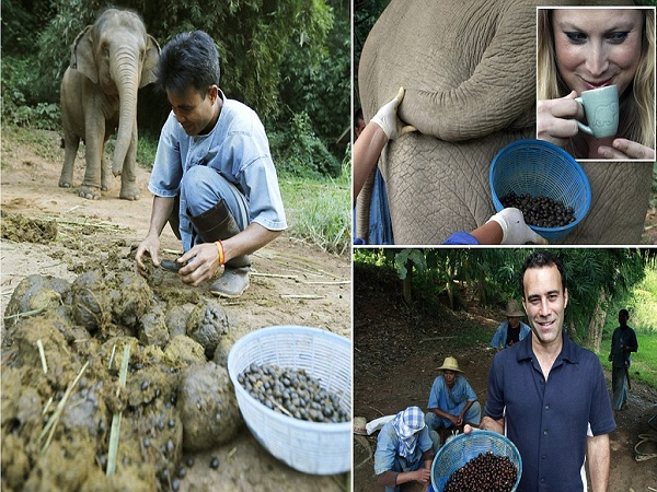 Elephant Dung Coffee