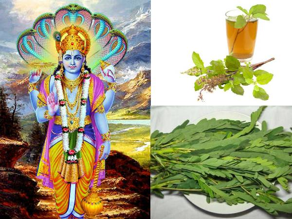 Vaikunta Ekadashi Fasting Eater should take Spinach and Tulsi leaves theertham