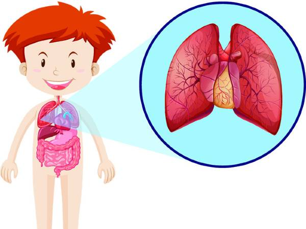 Surprising Facts About the Respiratory System