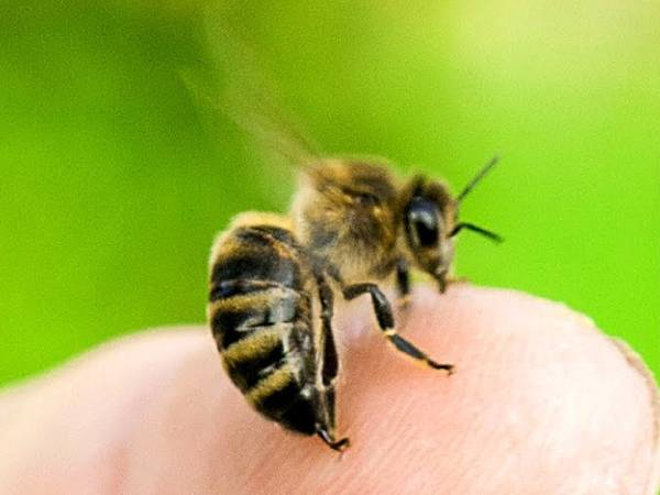 First Aid Solutions For A Bee Sting