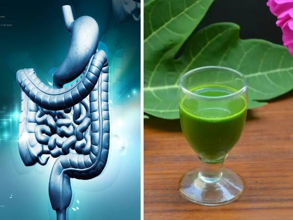 Papaya Leaf Juice: Health Benefits, How To Make And The Right Way To Consume