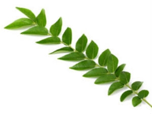 Curry Leaf Prevents Cancer