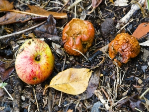Getting Rid Of Fungi In Vegetable Gardens 004838
