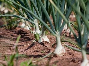 Vegetables Grow Pots