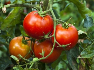 Reasons Why You Should Have Kitchen Garden 009286
