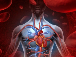 Fascinating Facts About The Human Heart World Heart Day