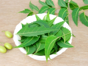 Why Is Neem Important Your Hair Tamil