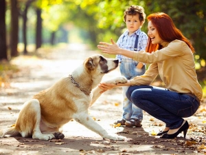 Why People Love More Dogs Than Other Pet Animals