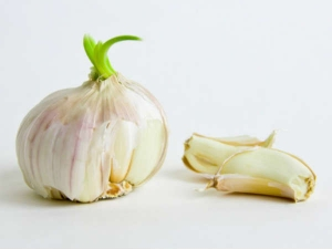 Warning Don T Ever Throw Out Sprouted Garlic Here S Why