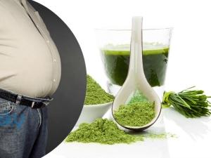 Ayurveda Health Benefits Wheat Grass