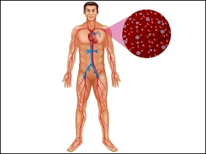 Foods That Can Help Increasing Platelet Count