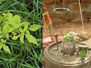 Miraculous Health Benefits Of Eating Bael Patra Bilva Leaves