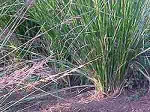 Cuscus Grass Root Mats Ornaments Aid