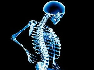 The Importance Calcium The Body Aid