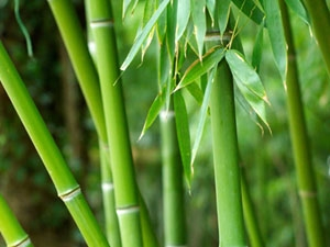 Health Benefits Bamboo Aid