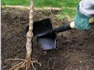Tree Planting Tips The Home Gardener Aid