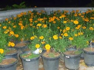 Grooming Your Flower Garden Aid