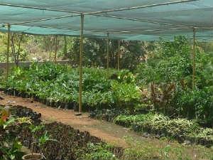 Homemade Greenhouse Tips Tricks Aid