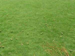 How Grow Grass Aid