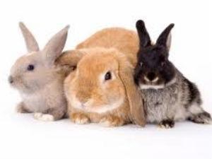 Tips A Healthy Rabbit