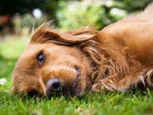 Remedies Cure Dog S Upset Stomach
