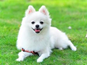 Dog Breeds Older People