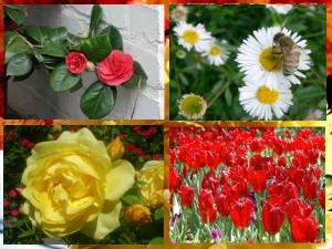 List Common Flowers Your Garden