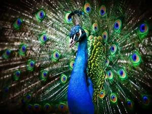 Animals N Birds Hindu Deities Vehicle