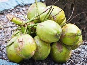 Health Benefits Coconut Water